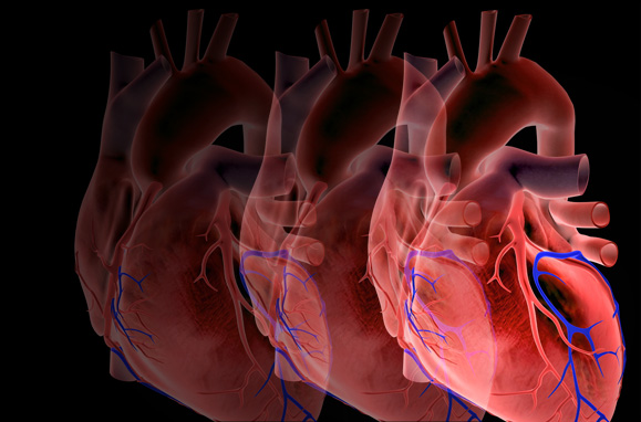 Can Estrogen Protect Women Against Heart Disease?